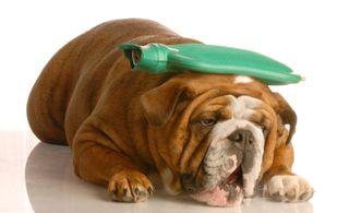 Dog.MP900448552[1]